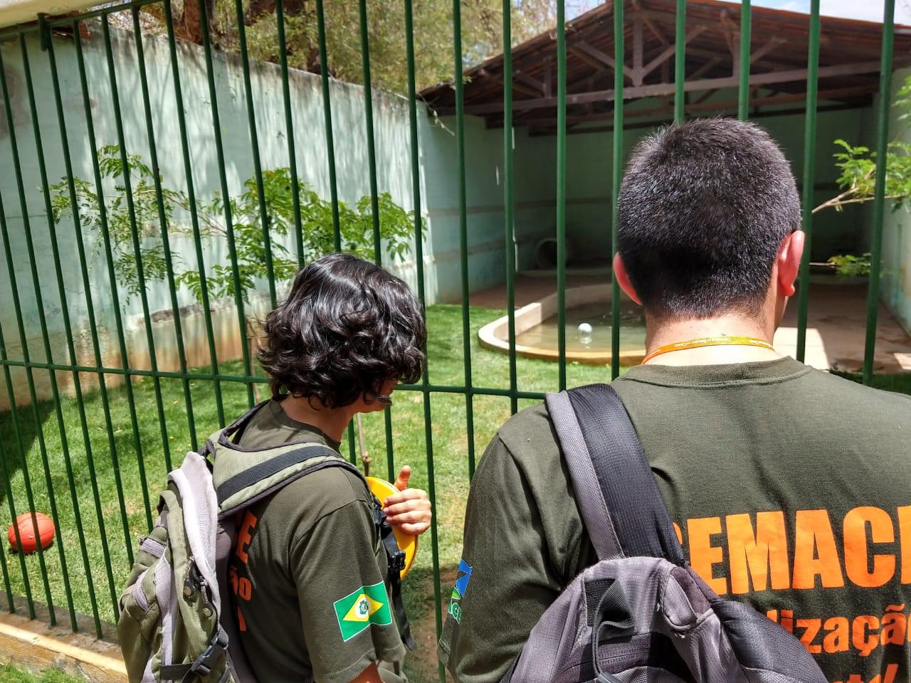 Fiscais da Semace observam jaula de ursos