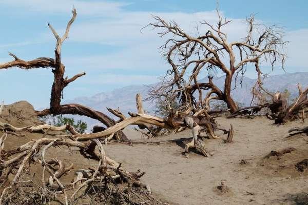 Área de floresta degradada com árvores mortas