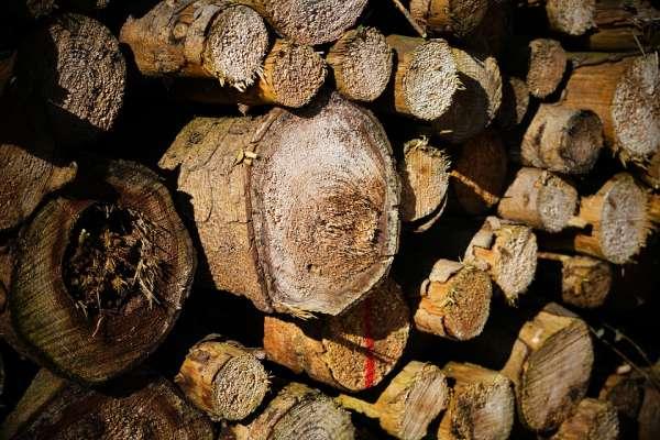 Pilha de madeira para lenha