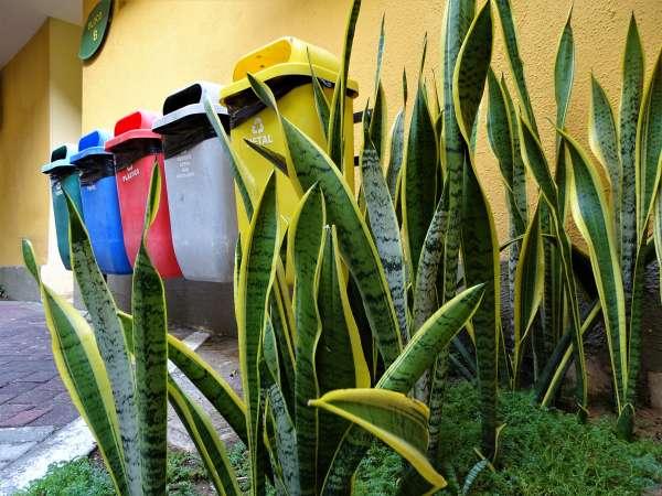 Coletores da coleta seletiva de resíduos recicláveis instalados na Semace
