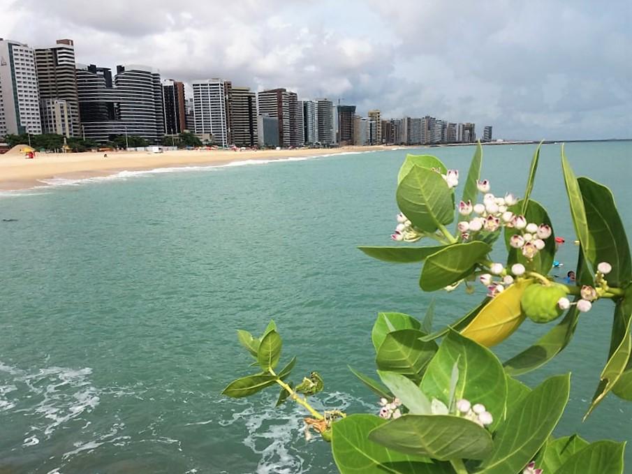 Semace divulga primeira balneabilidade do ano para praias de Fortaleza